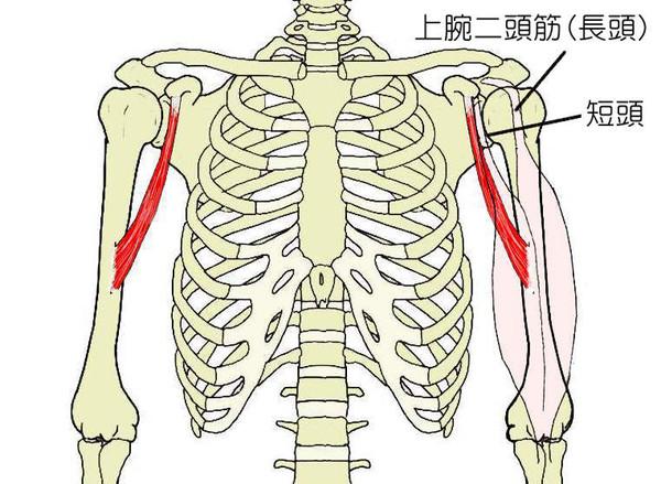 肩甲骨の痛み「10日前から痛かっ...